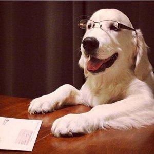 an-executive-dog