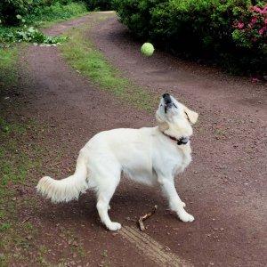 aspen-k-catches-a-ball