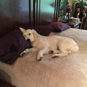 chloe-sound-asleep-a-crystall-and-snow-bear-offspring
