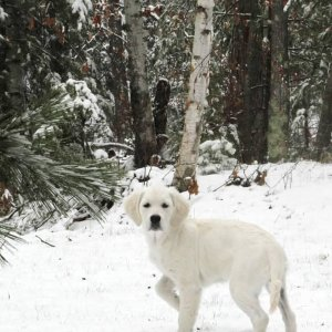 skye-a-snow-bear-and-snow-white-offspring