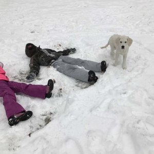 yeti-a-snow-bear-and-frostie-offspring