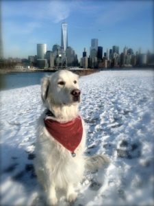tiberius-holiday-2016-in-nyc