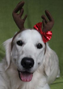 Sparkle--a-very-cute-reindeer